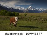 cow looking into camera with... | Shutterstock . vector #109948577