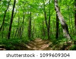 hiking trail surrounded by... | Shutterstock . vector #1099609304