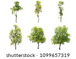Small photo of set of green tree isolated on white with cli[pping path