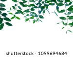tropical leaves hanging from... | Shutterstock . vector #1099694684