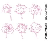 rose flowers linear graphic... | Shutterstock .eps vector #1099696001