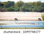 blur in south africa    kruger  ...   Shutterstock . vector #1099748177