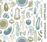 vegetables hand drawn vector... | Shutterstock .eps vector #1099761104