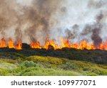Raging Bush Fire Across The...