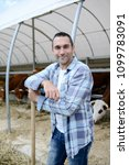 Small photo of portrait of handsome farmer in a livestock small breeding husbandry farming production taking care of charolais cow and cattle