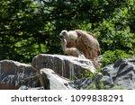 Baby Vulture Bird