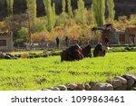 turtuk  ladakh india march 31...   Shutterstock . vector #1099863461