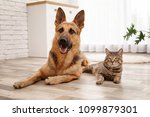 Stock photo adorable cat and dog resting together at home animal friendship 1099879301