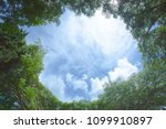 the green trees top in forest... | Shutterstock . vector #1099910897