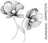 poppy. floral botanical flower.... | Shutterstock . vector #1099927274