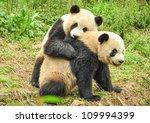Two Great Pandas Playing...