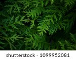 green background with branches... | Shutterstock . vector #1099952081