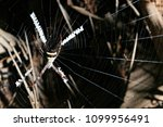 The St. Andrews Cross Spider ...