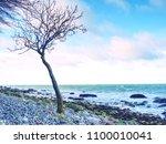 lonely tree on empty stony... | Shutterstock . vector #1100010041