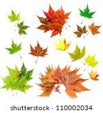 leaf | Shutterstock . vector #110002034