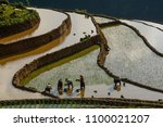 people working on terraced rice ... | Shutterstock . vector #1100021207