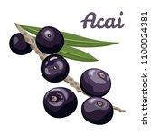 acai berries. vector... | Shutterstock .eps vector #1100024381