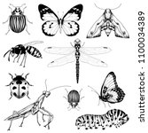 big set of vector insects...   Shutterstock .eps vector #1100034389