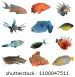 collection tropical saltwater... | Shutterstock . vector #1100047511