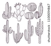 illustrations of wild cactuses. ... | Shutterstock .eps vector #1100054867