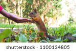 Small photo of Squirrel (Sciurus) pulling its hands towards nuts in hand