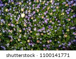beautiful colorful blue... | Shutterstock . vector #1100141771