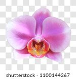 close up thai pink orchid with... | Shutterstock . vector #1100144267
