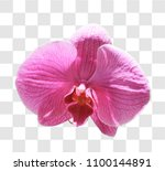 beautiful pink orchid with... | Shutterstock . vector #1100144891