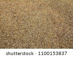 paddy. unmilled rice. rice in... | Shutterstock . vector #1100153837