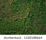 aerial view of the green mixed... | Shutterstock . vector #1100188664