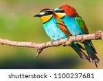 paradise birds sit on a dry... | Shutterstock . vector #1100237681