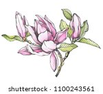 branch of pink magnolia... | Shutterstock . vector #1100243561