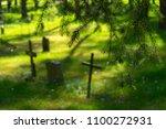 Graveyard Nature Fir Trees...