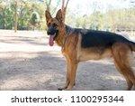 german shepherd image | Shutterstock . vector #1100295344