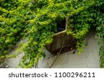 Small photo of green plants outgrow and covered a rusted old vent