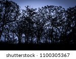 forest silhouette at sunset   Shutterstock . vector #1100305367