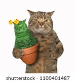 Stock photo the cat holds a pot with an unusual cactus white background 1100401487