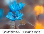 flower   blue crown anemone ... | Shutterstock . vector #1100454545