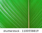 green leaves texture tropical... | Shutterstock . vector #1100558819