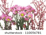 pink flowers on the light... | Shutterstock . vector #110056781