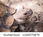 close up turtle face   Shutterstock . vector #1100575874