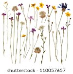 Stock photo pressed wild flowers isolated on white background 110057657