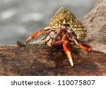 The Caribbean hermit crab ( Coenobita clypeatus) on the beach of Puerto Vieja de Talamanka, Costa Rica
