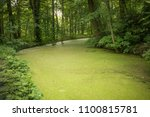 forest landscape in the spring... | Shutterstock . vector #1100815781