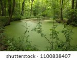 forest landscape in the spring... | Shutterstock . vector #1100838407