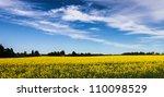Blue sky over yellow farmland field - stock photo
