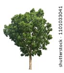 green tree isolated on white... | Shutterstock . vector #1101033041