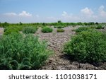 Plant Grow In Arid Areas Like...