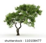 3d Japanese Maple Tree Isolate...