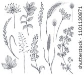 set of herbs and flowers  hand...   Shutterstock .eps vector #1101130871